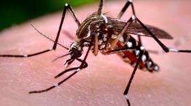 Воронежские комары высосали из бюджета