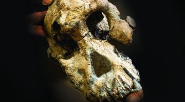В Эфиопии нашли череп обезьяноподобного предка человека — это может изменить представление о прародителях людей