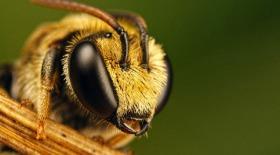 Пчёлы получили доп.образование