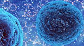 Стволовые клетки нуждаются в контроле