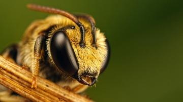Спасти рядовую пчелу