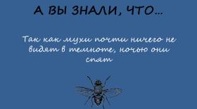 Когда беззащитна муха