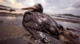 Графит очистит моря от нефти